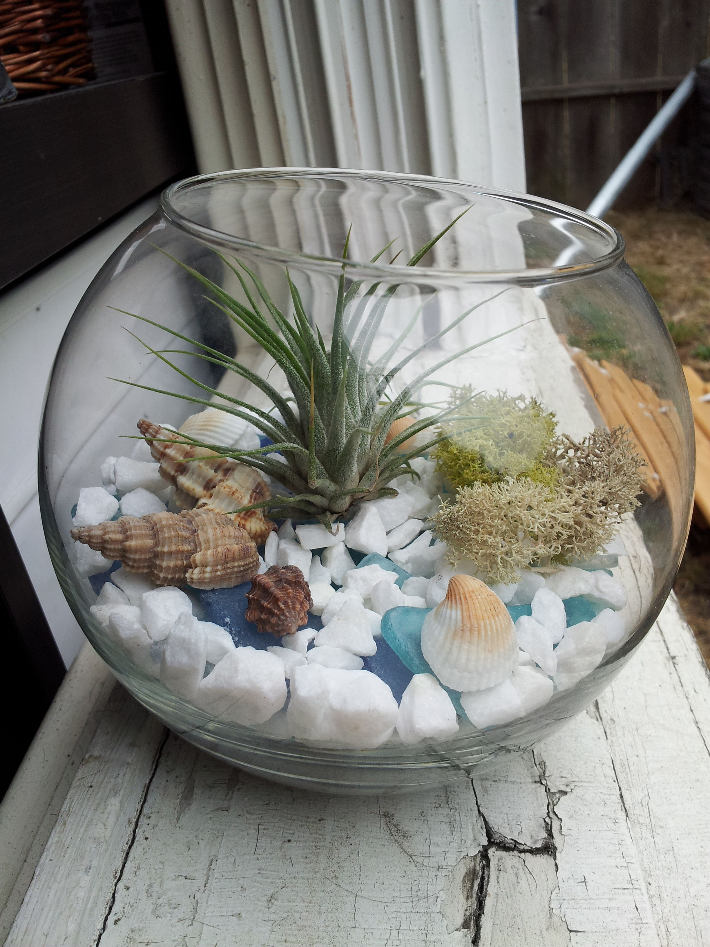 Tillandsia air plant terrarium with sea glass stones shells