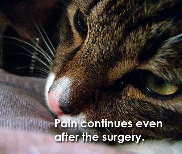 8 Reasons Why You Should Never Declaw Your Cats