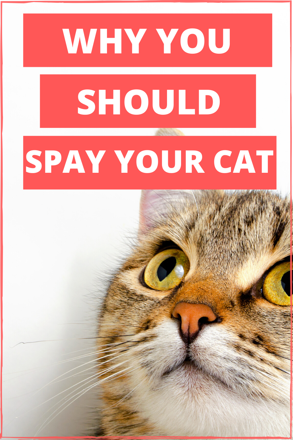 How Old Should My Kitten Be To Get Spayed