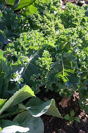gemüse und kräuter für den schatten www.tinto.de/tipps/gemuese-und, Terrassen ideen