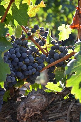 Quantrell Quips: Harvest Time ~ The Fruit of Vacation