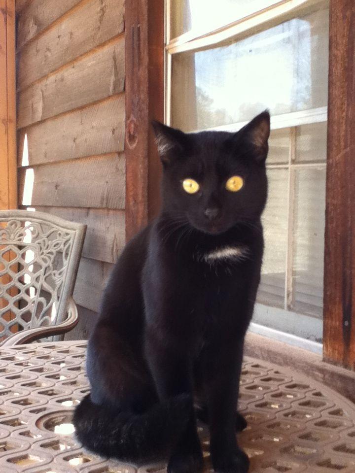 Found Cat Unknown Jackson, GA, USA 30233 on February