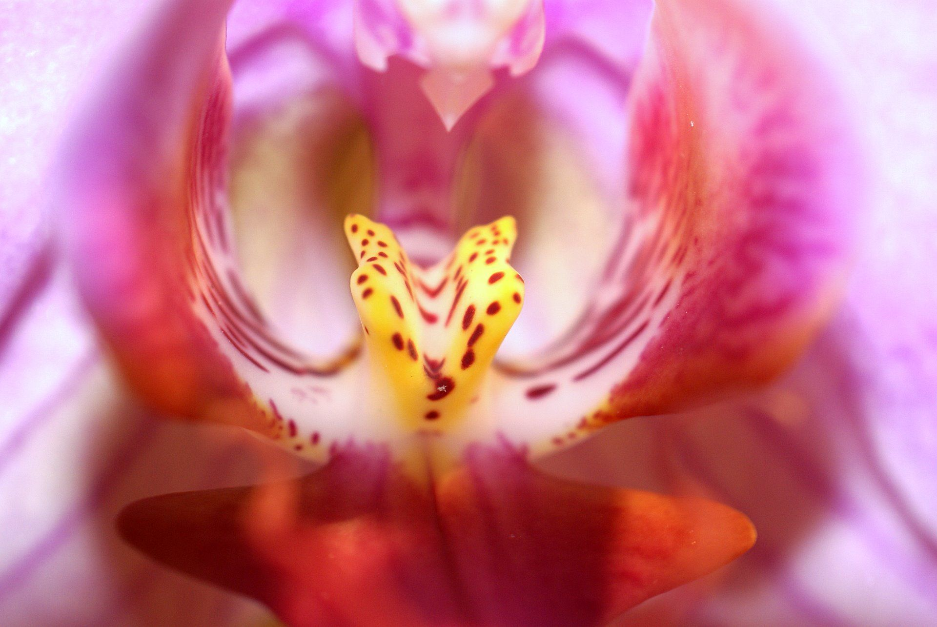 Orchid Flower Macro 1 1 Flowers Photography Wallpaper Orchid Flower Flowers Photography