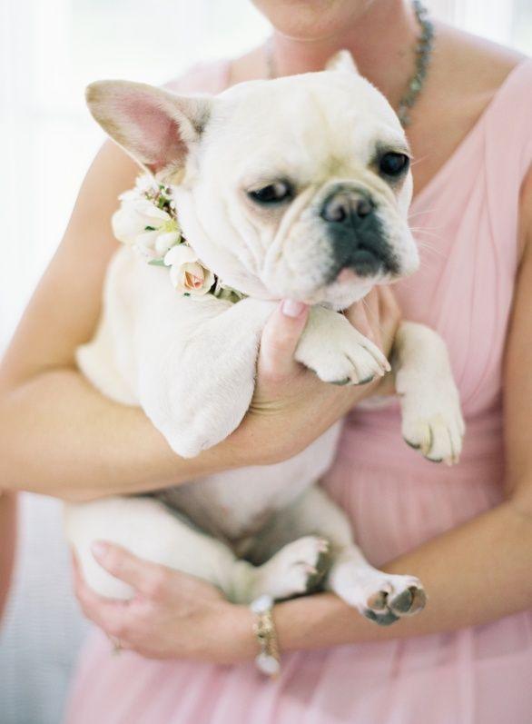 Dog French Bulldog Flower Girl Jen Huang Photo Baby Dogs