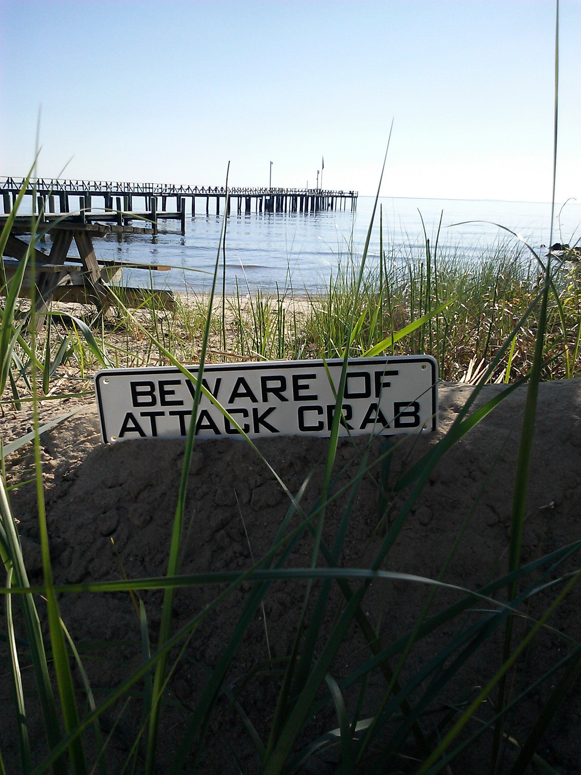 Beware Of The Maryland Blue Crab