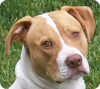 Pin On Pits My Other Favorite Doggies