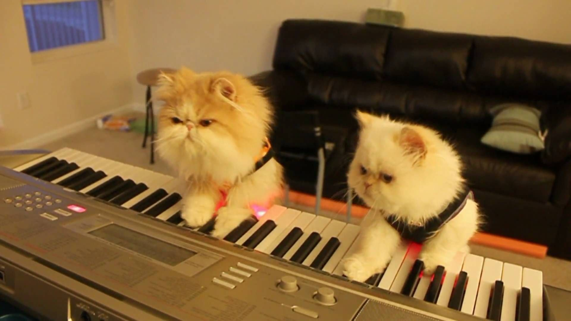 Kitten Duet Spooky Halloween Music On Keyboard Piano Kittens Funny Funny Cat Compilation Baby Cats