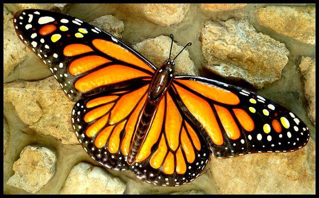Monarch Butterfly Wall Decor Painted Metal Wall Art Decorative Metal Art Garden Art 16 X 34 Outdoor Metal Art Butterfly Wall Decor Butterfly Wall Art