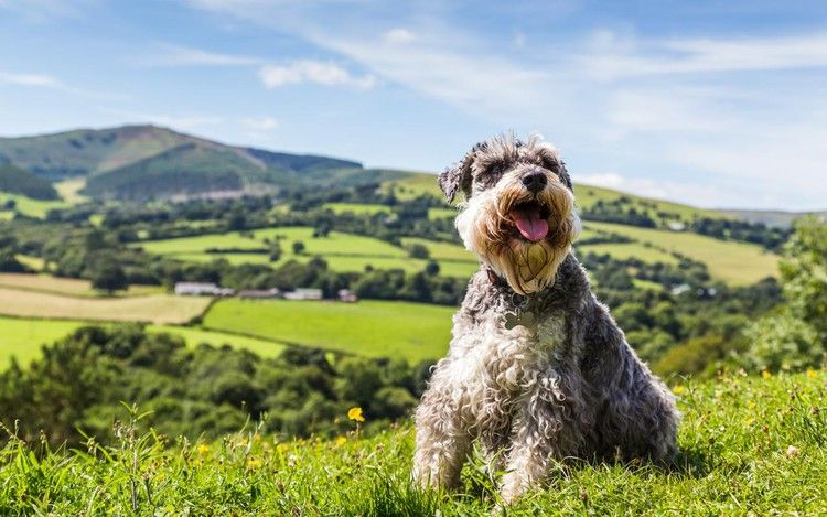 Dog Friendly Attractions In Wales Your Four Legged Friend Will Love The Telegraph Dog Friends Dogs Pet Friendly Holidays