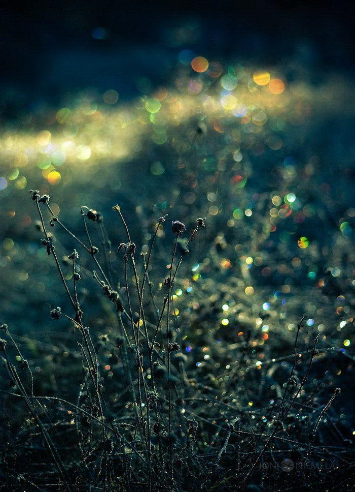 Статусы картинки красивые цветы природа нужно найти