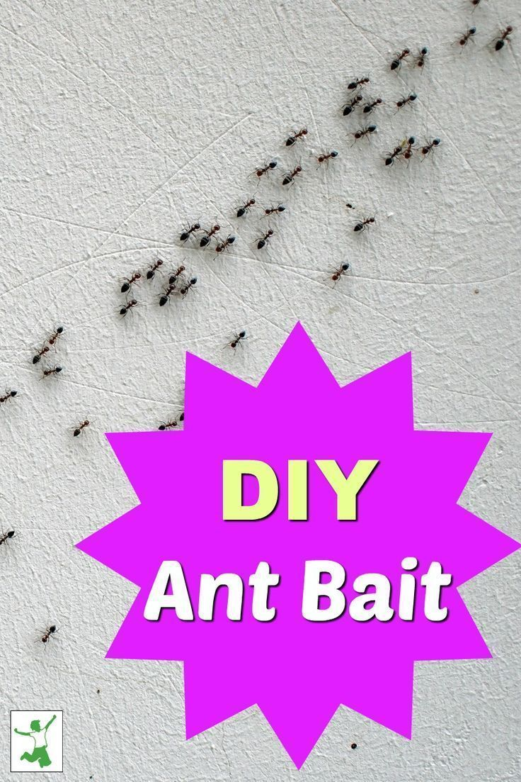 Homemade ant bait get rid of ants in the house fast rid