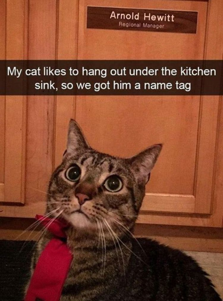 Pin by Chelci Humm on Cat Lady Funny cat pictures, Funny
