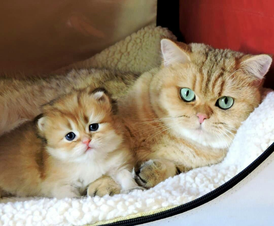 Mom Cat Kitten Cats And Kittens Cats Cute Cats And Dogs