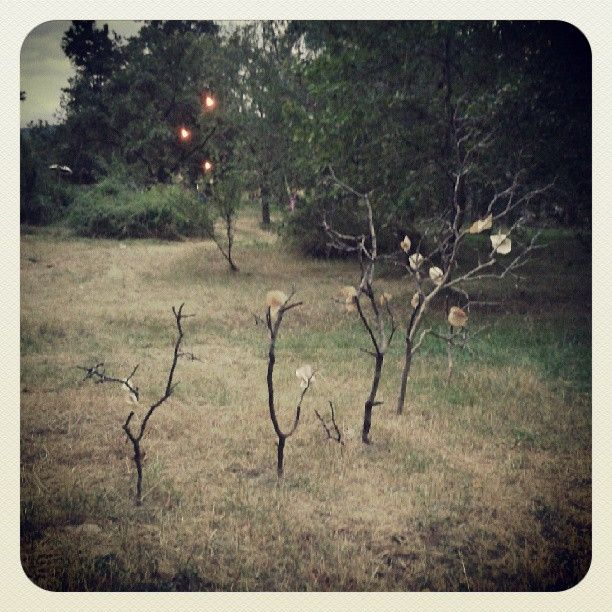 #paperroses #artinstallation #redqueenroses #aliceinwonderland