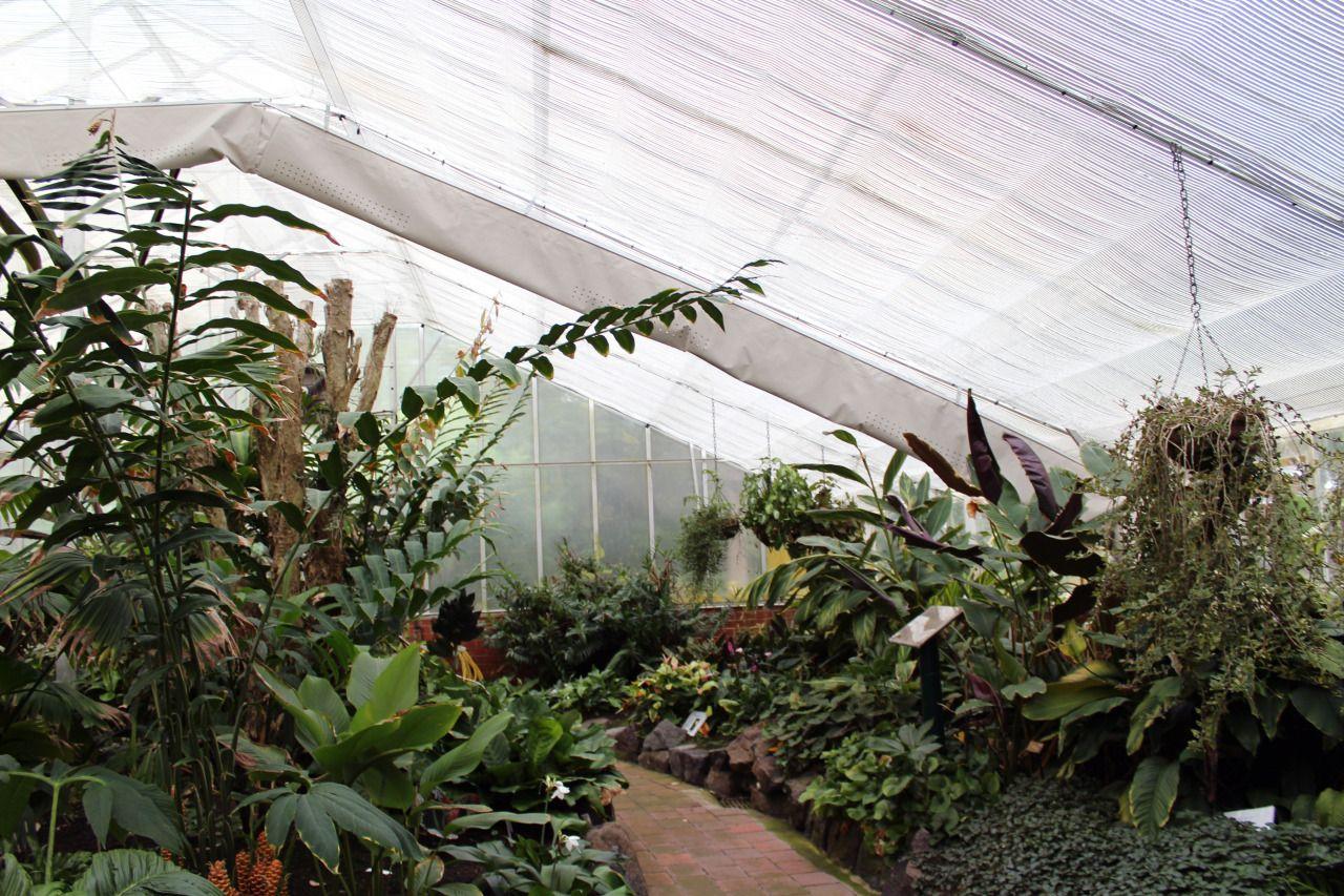 Ebony Eden: Glasshouse In My Local Botanic Gardens