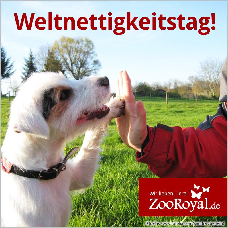 Morgen ist #Weltnettigkeitstag! Sichere dir schon jetzt tolle Produkte und verwöhne deinen Liebling mit einem tollen Geschenk!  Hier geht es zu unseren Produkten: http://www.zooroyal.de/ Tolle Angebote und Aktionen findest du hier:  http://www.zooroyal.de/aktionen/