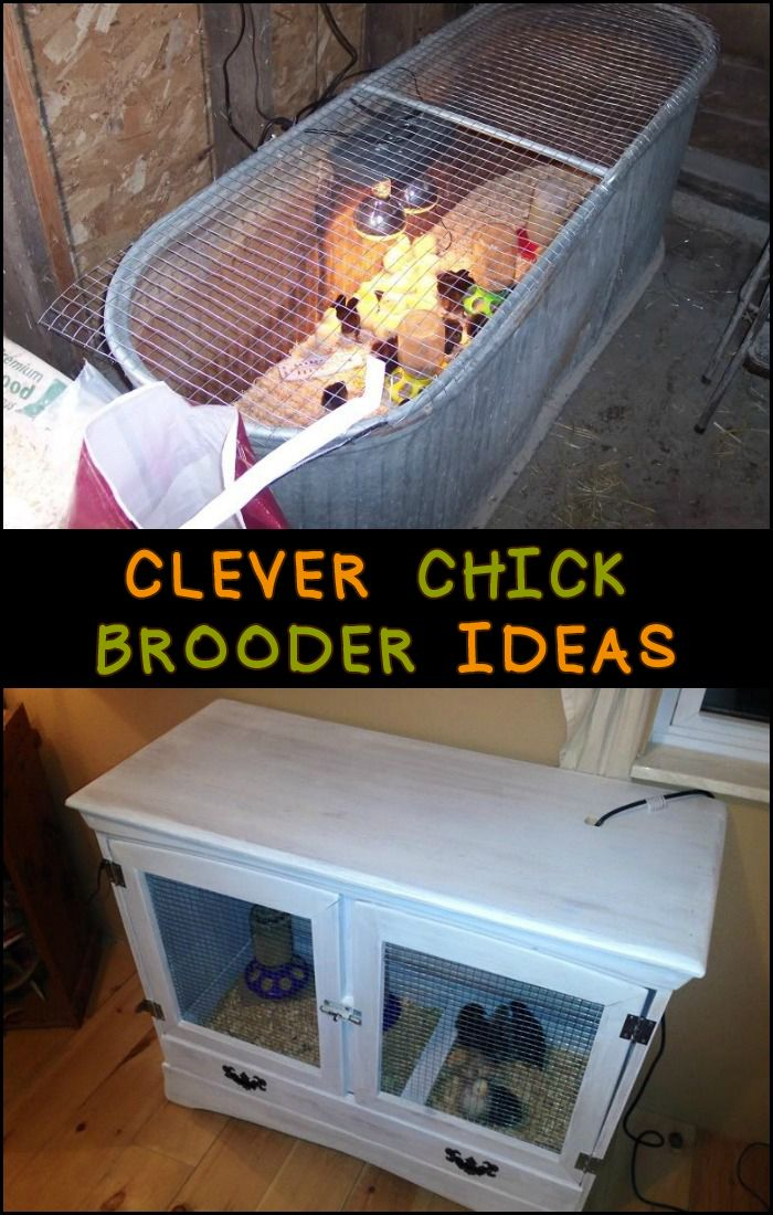 Planning On Raising Chicks In Your Backyard? You Are Going To Need These  Clever DIY Brooder Ideas.