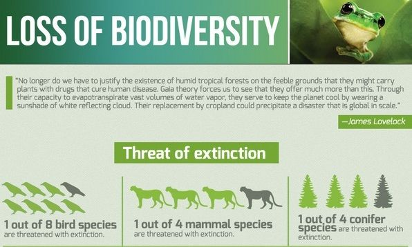 5 Great Infographic That Highlight Key Environmental Issue Science Essay Topics Good