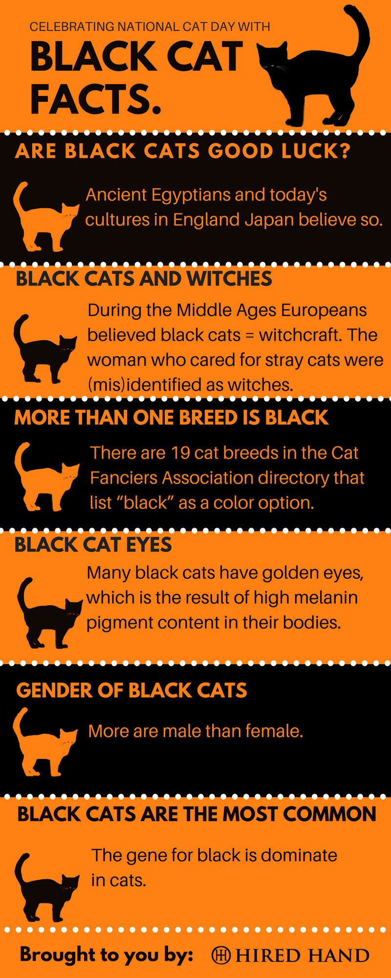 Celebrating National Cat Day with facts about Black Cats