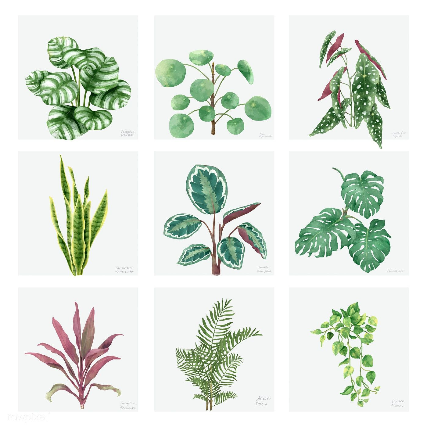 17 indoor plants Watercolor ideas
