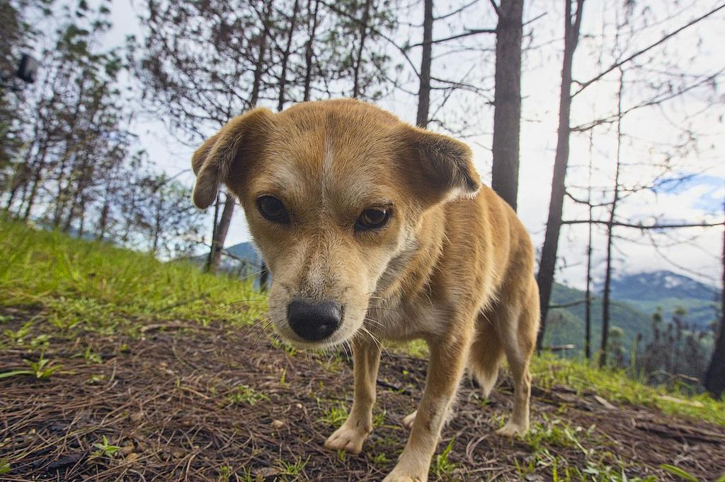 Animal Rescue Volunteers Travel Around The United States To Save Animals From Being Euthanized Due To Lack Of Space Please Sign This Petition To Thank Them For