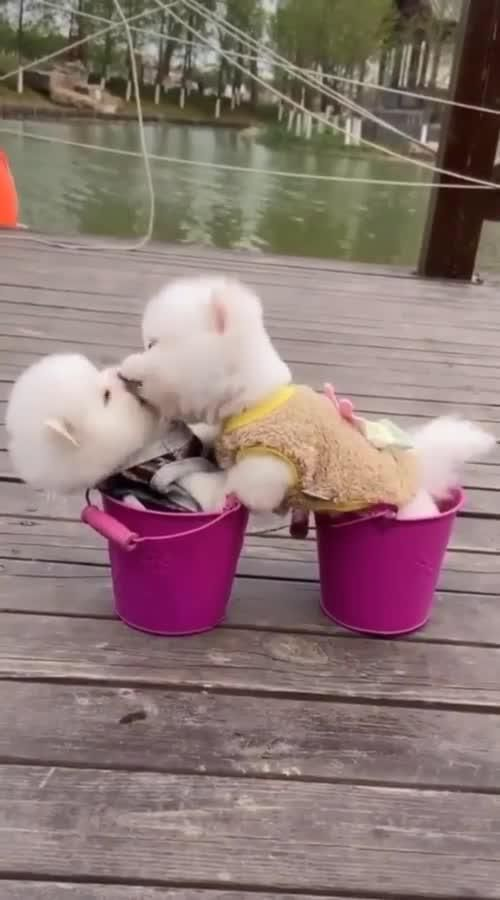 Funny Dogs Kissing Super Cute