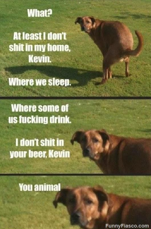 I Dont Shit In Your Beer Kevin Funny Dogs Funny Animals Animal