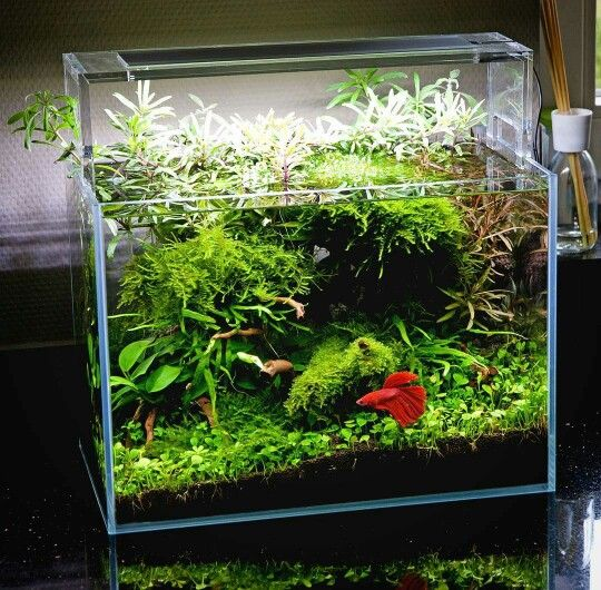 #Betta nano tank. | Fish tank plants, Betta fish tank ...