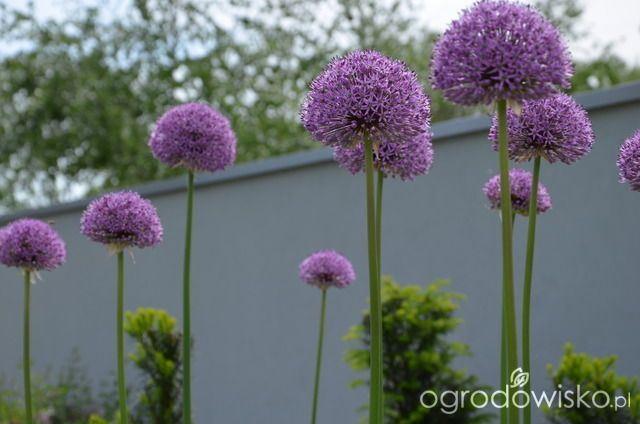 Ogrod Do Kwadratu Flowers Plants Home And Garden