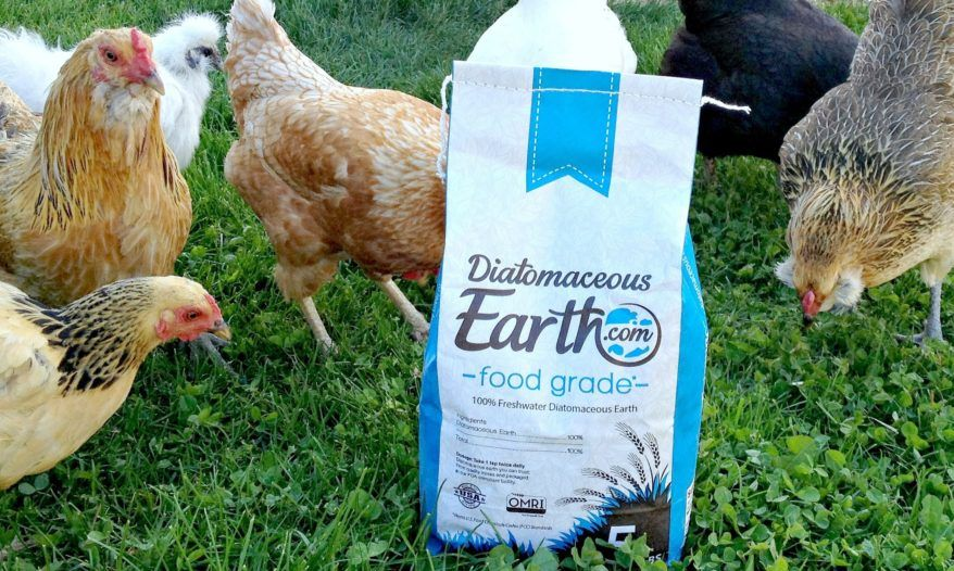 We Love Diatomaceous Earth (and You Should Too!) Earth