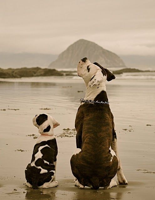 American Bulldog And Pup Animals Cute Animals Pets