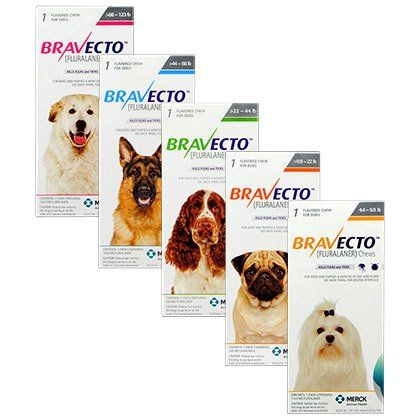 Bravecto Is The First Flea Control Chew For Dogs That Lasts Up To 12 Weeks Each Chew Also Protects Against 4 Type Meds For Dogs Brown Dog Tick Animal Medicine