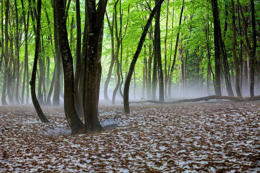 Spring Mist by h_shirasaki. Please Like http://fb.me/go4photos and Follow @go4fotos Thank You. :-)