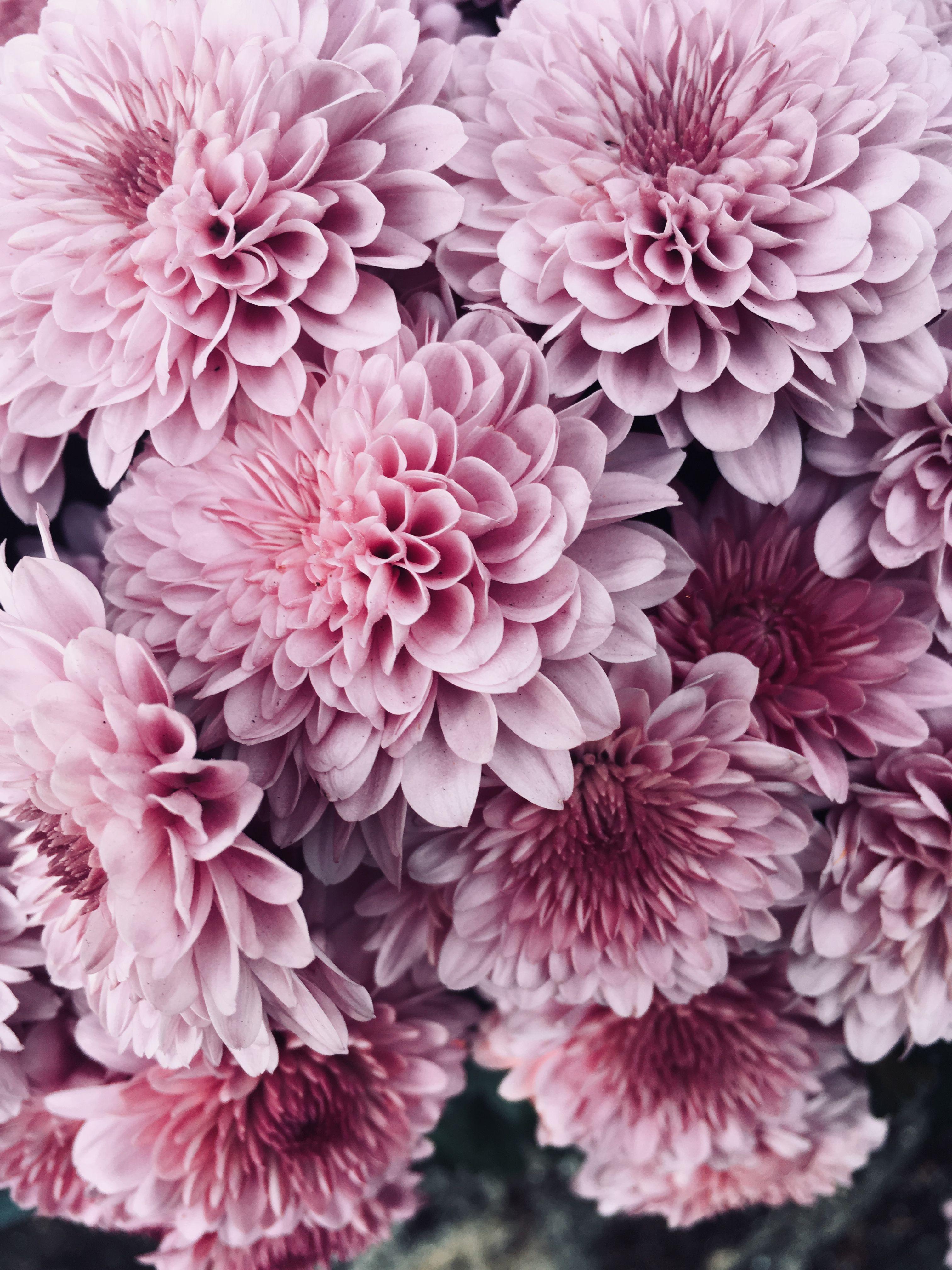 Pink flowers background moodboard pinterest flowers plants