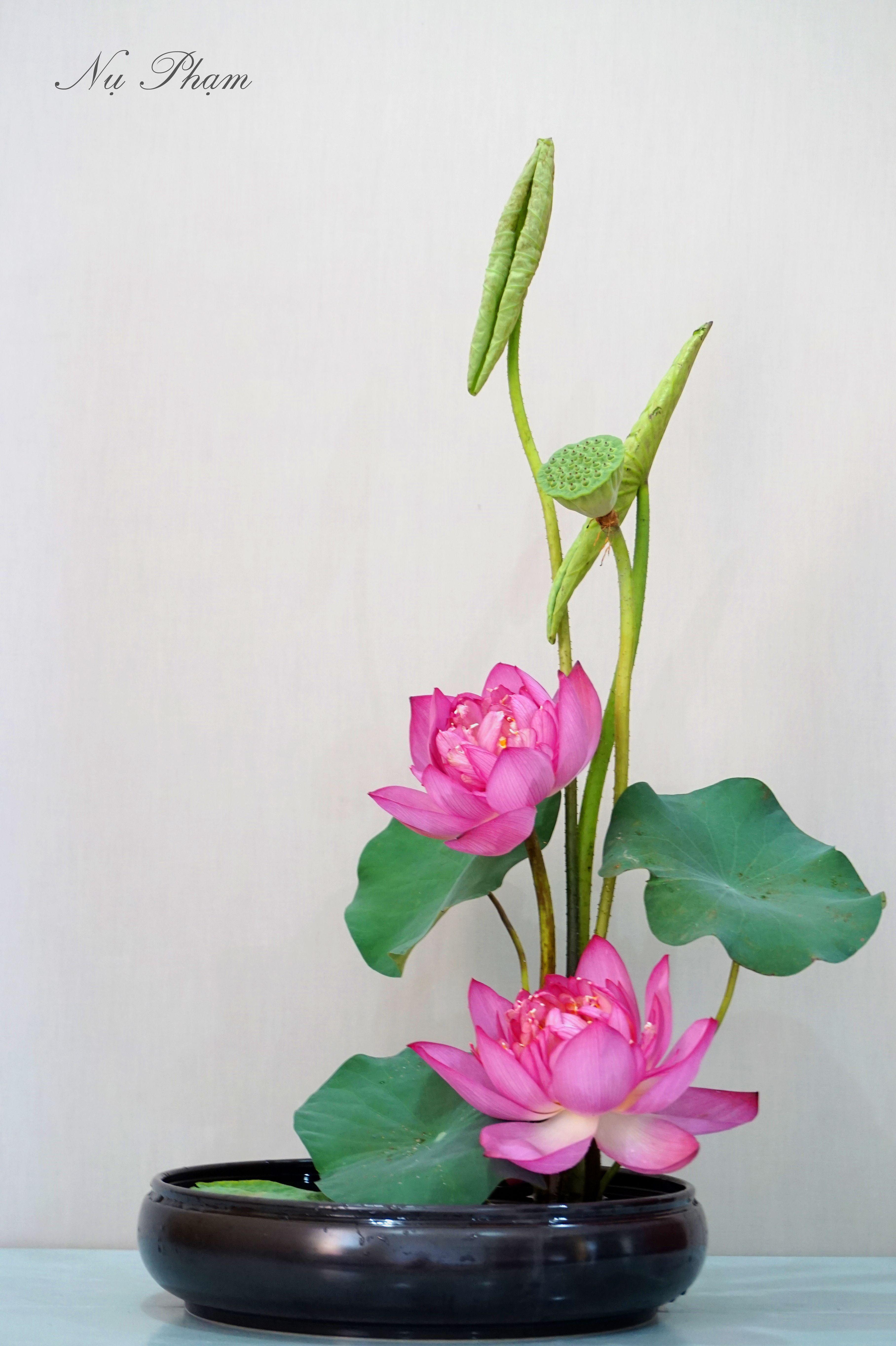 Ikebana Lotus Flower Lotus Pinterest Ikebana Lotus And