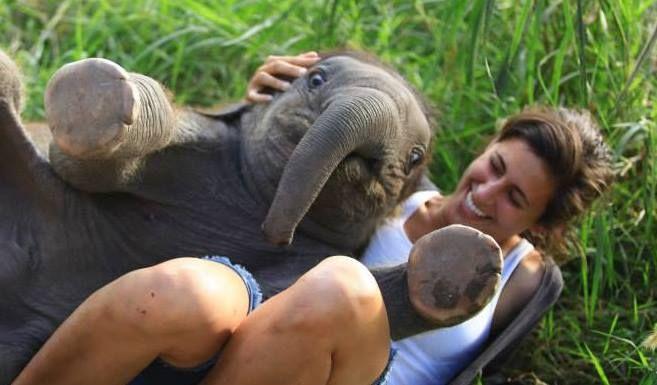 elephant baby - Buscar con Google