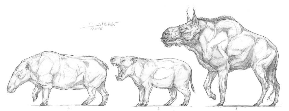 Cetancodontamorpha by Gredinia on DeviantArt in 2020