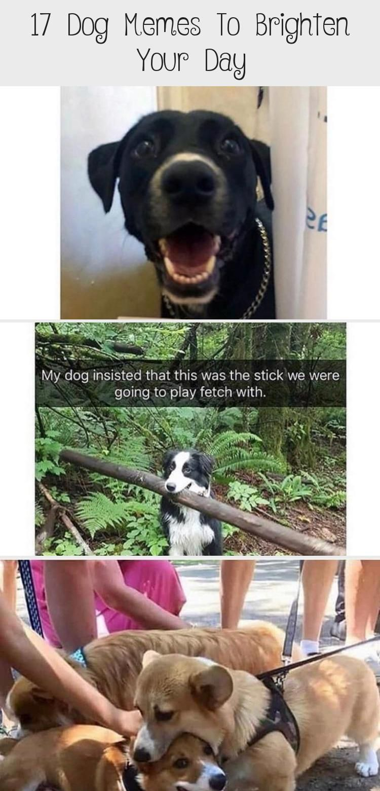 17 Dog Memes To Brighten Your Day, 2020