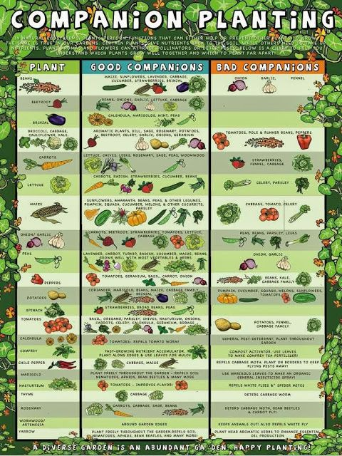 Southern California Garden Guide Basic Gardening Easy Companion Planting