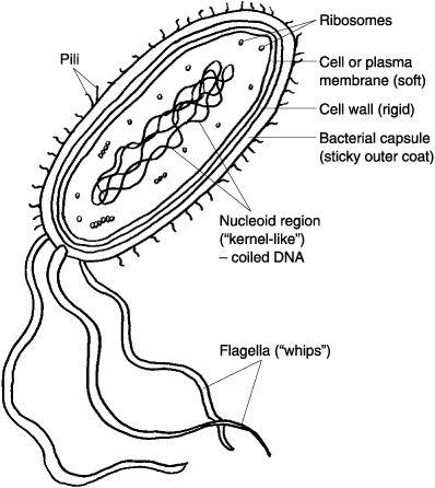 Prokaryotes & Eukaryotes