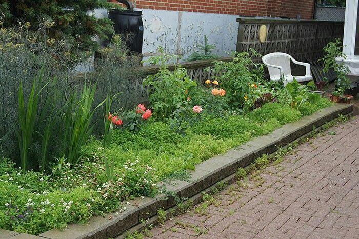 Pin By Elaine Gilbert On A1 Pins E Plants Garden 640 x 480