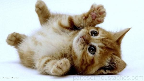 Photo De Chaton Trop Mignon A Imprimer Avec Images Photo De