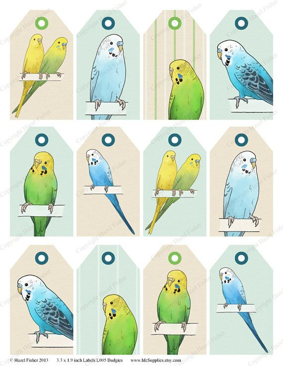budgies printable labels gift tags budgerigar pet birds illustration luggage tag digital instant download l005 budgies printable labels and bird - Printable Bird Pictures 2