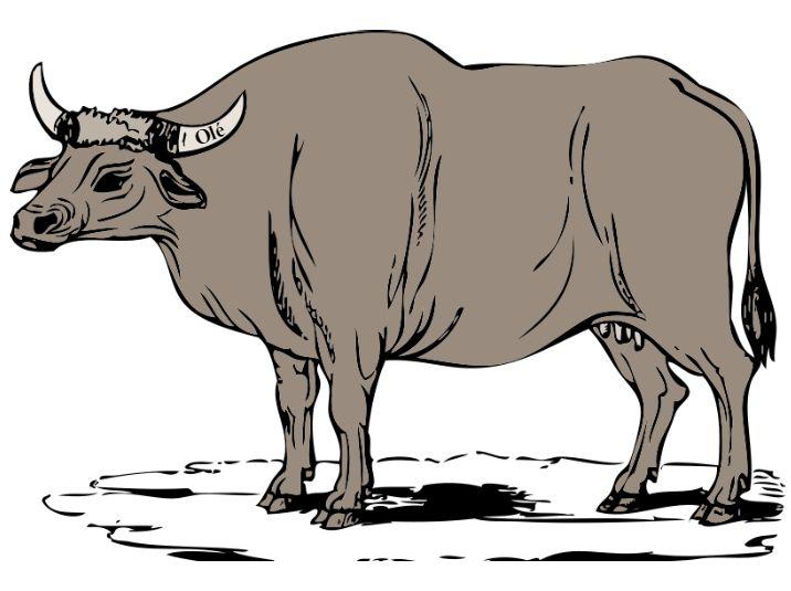 Ox Olé - Naked Nutrition n Nia - HBNE