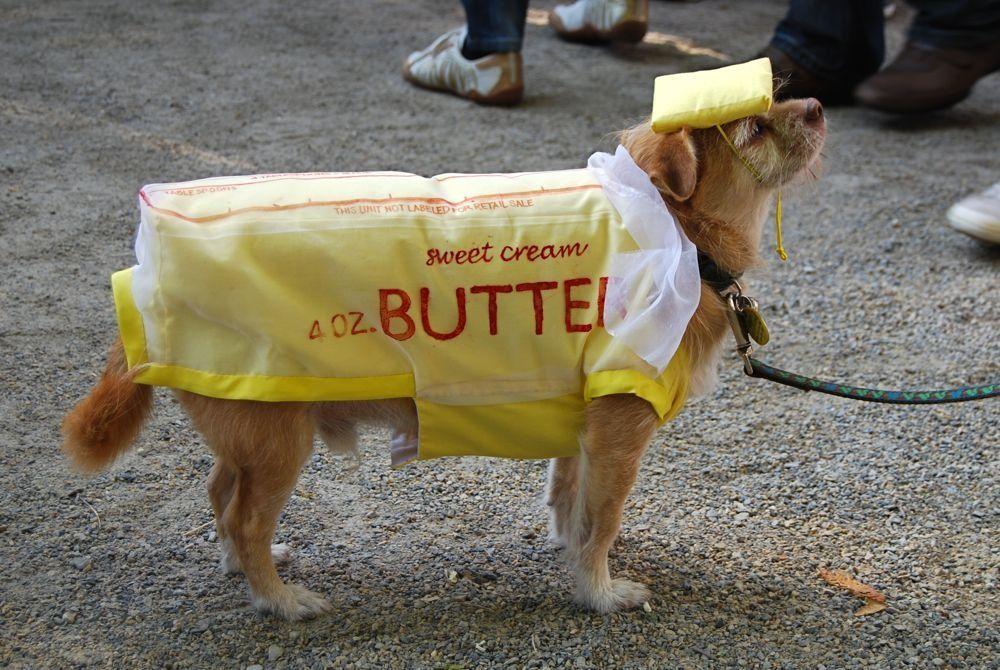 Butter dog cosyume #Halloween | Best dog halloween costumes