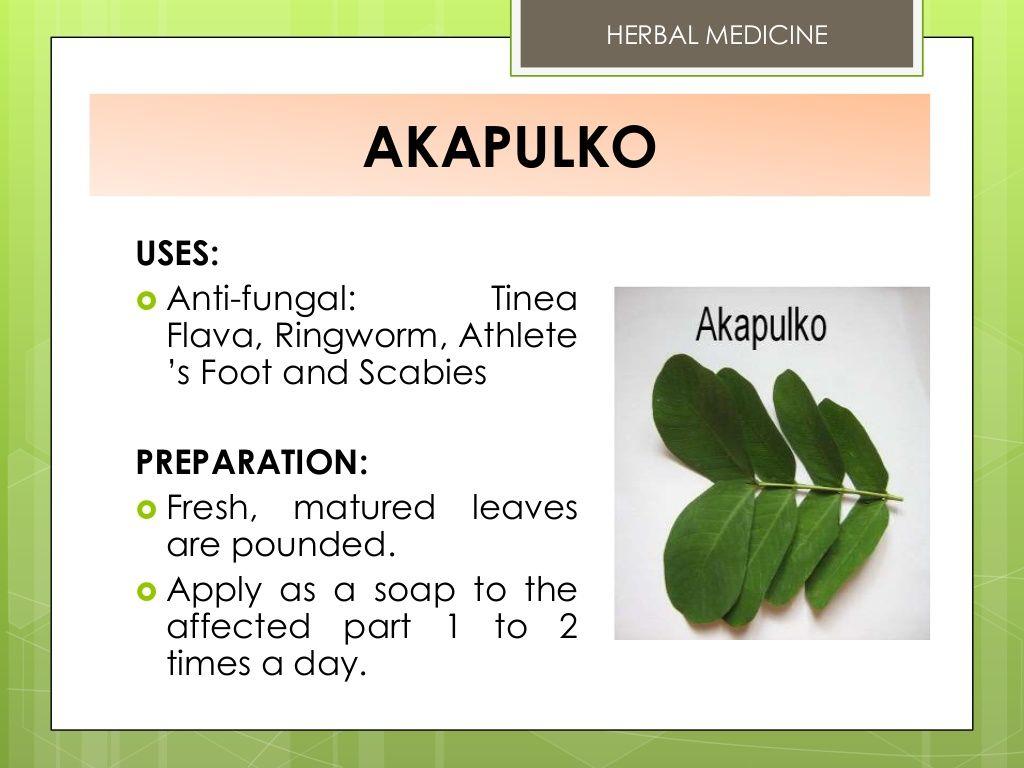 Herbal medicine akapulko uses antifungal tinea flava