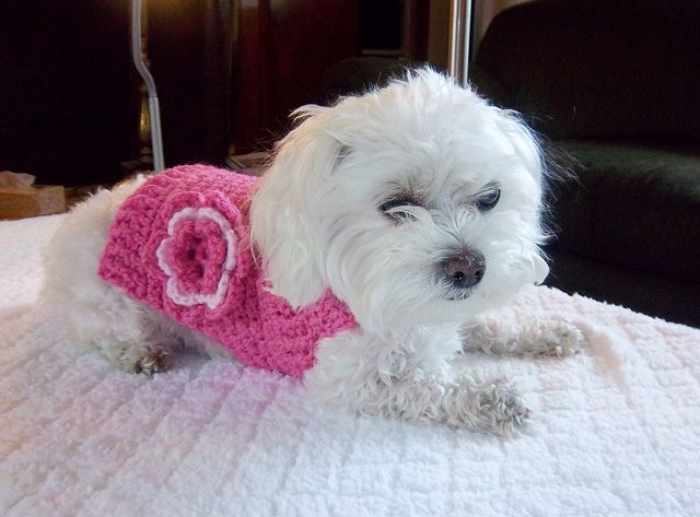 Crocheted Pink Sweater for Baby Maltese Dog #dogcrochetedsweaters