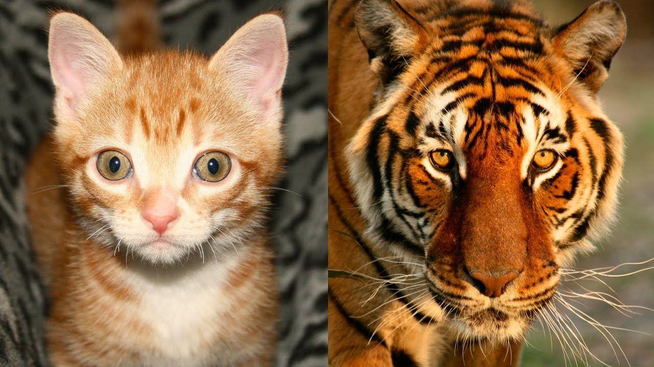 водяной шар сходство кошек и животных фото фамилию елена
