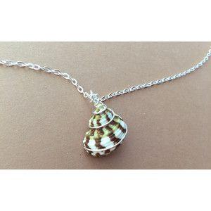 Shell necklace turban seashell beach jewelry wire wrapped turban shell necklace turban seashell beach jewelry wire wrapped turban shell sea shell aloadofball Gallery