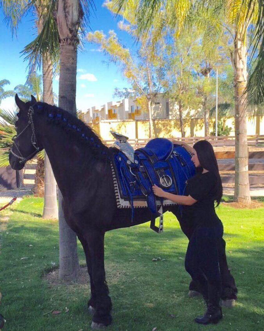 Porque un caballo de lujo merece una montura de lujo caballo caballos monturas de caballo - Silla montar caballo ...